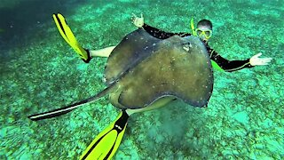 Swimmer pets and plays among wild stingrays in Belize
