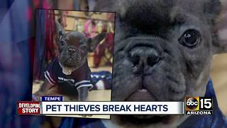 French bulldogs stolen from Tempe pet store - Video