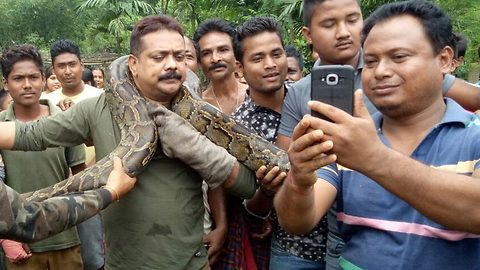 Selfie mania: forest ranger's narrow escape as 35ft python tries to crush neck while posing for selfies