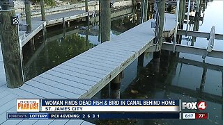 Pine Island woman concerned over dead pelican and fish in her canal