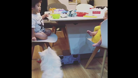 Dog fascinated by toddler and baby's conversation