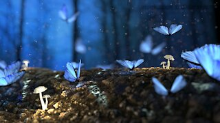 Meditation with relaxing instrumental music, I slept, meditate inner peace