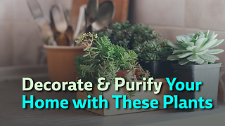 Decorate & Purify Your  Home with These Plants - Video