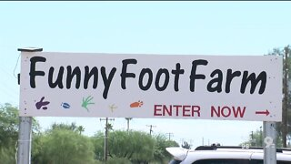we're open funny foot farm and petting zoo