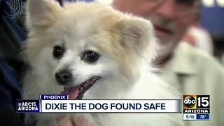 Dixie the pony riding dog has been found safe - Video