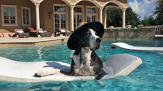 Great Dane in sun hat chills on pool floatie