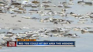 Red tide killing fish on Siesta Key, scientists fear it will continue to spread