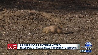 Residents upset with Denver Water over prairie dog management