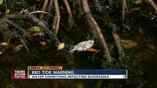 Businesses along the coast say they're hurting because of red tide - Video