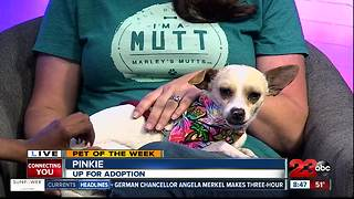 Meet our 23ABC Pet of the Week, Pinkie! - Video