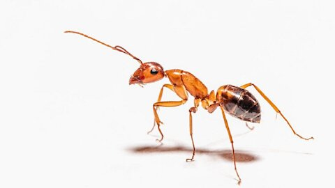 What If Ants Were the Size of Elephants?