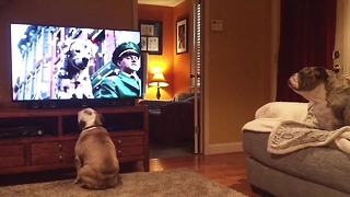 Bulldogs incredibly cheer on stray canine in Budweiser commercial - Video