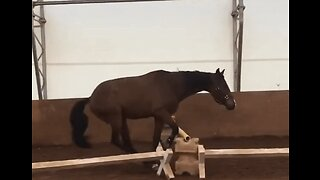 Horse Stumbles at First Hurdle During Training