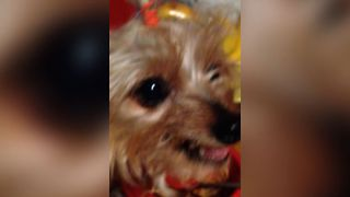 Small Dog Doesn't Like To Share - Video