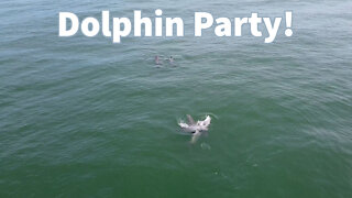 Dolphin Party in Fort Morgan Alabama!