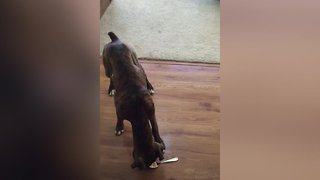 Dogs Eating Peanut Butter – So Funny!