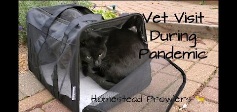 Homestead Cats Go To Vet During Covid 19 Pandemic