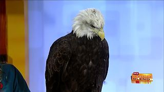 Xtreme Raptor Day at Schlitz Audubon Nature Center - Video