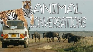 What Animals Actually Say to Each Other - Video