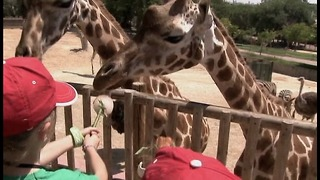 Zoo's New Savanna Section - Video