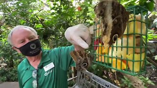 Denver7 Everyday Hero fosters curiosity at Broomfield's Butterfly Pavilion