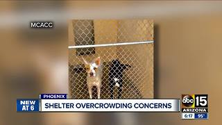 Maricopa County animal shelter dealing with major overcrowding, again - Video