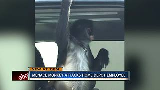 Pet monkey escapes from truck, attacks Home Depot employee