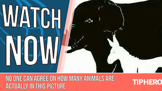 There Are 16 Animals in This Picture. Can You Find Them All? - Video