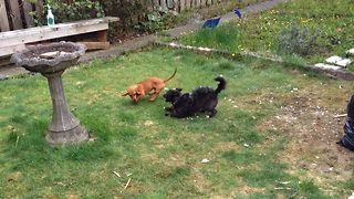 Adorable Puppy Playtime
