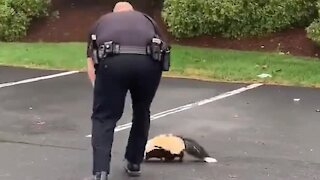Police officer frees skunk with container stuck on its head