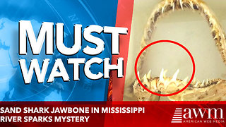 Sand Shark Jawbone In Mississippi River Sparks Mystery - Video