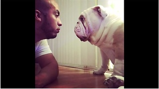 Bulldog refuses to let human lecture him - Video