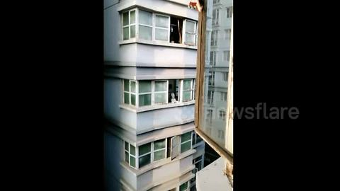 Husky Pops Out Of Window To Reply A Man's Howl