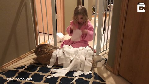 Huge Rabbit Is Best Friends With Toddler
