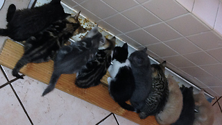Dinner-time...Cute Kitten Stampede!  - Video