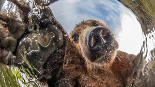 Photographer catches hilarious shots of curious bears from underwater camera - Video