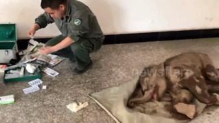 Police in China rescue baby elephant trapped in ditch - Video