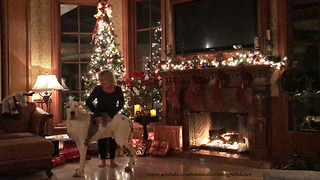 Alexa Christmas Music Cuddling with Deaf Great Dane  - Video