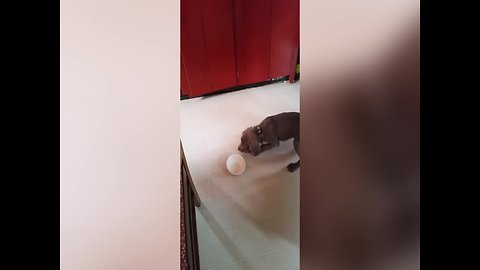Fierce Puppy Faces off with Empty Bowl
