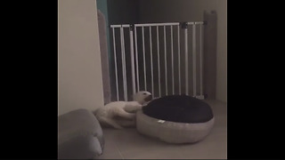 Puppy turns bed into his own personal spin toy - Video