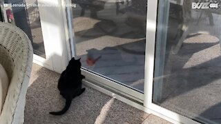 Glass window can't prevent cat and bird having fun together