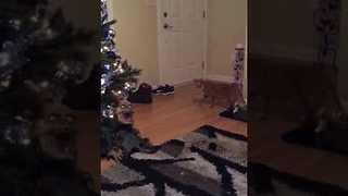 Halloween prop protects Christmas tree from cat - Video