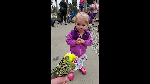 Toddler reacts to parakeet encounter at petting zoo