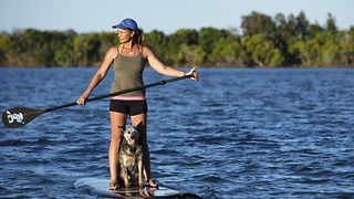 This pup is a paddleboard pro - Video