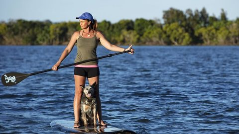 This pup is a paddleboard pro