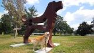 Winterpark Florida Doggie Cam - Video