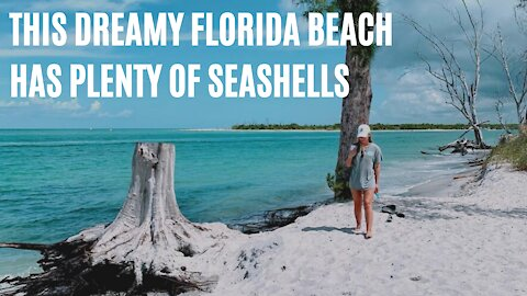 This Dreamy Florida Spot Only Locals Know About Is Perfect For Finding Seashells
