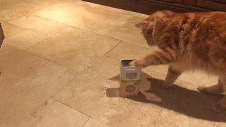 Clever Jack the Cat has Kong Catnip Party  - Video
