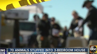 Dozens of animals removed from east Mesa home - Video