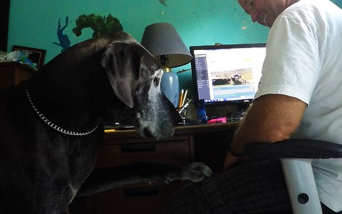 Great Dane competes with Rumble videos for attention